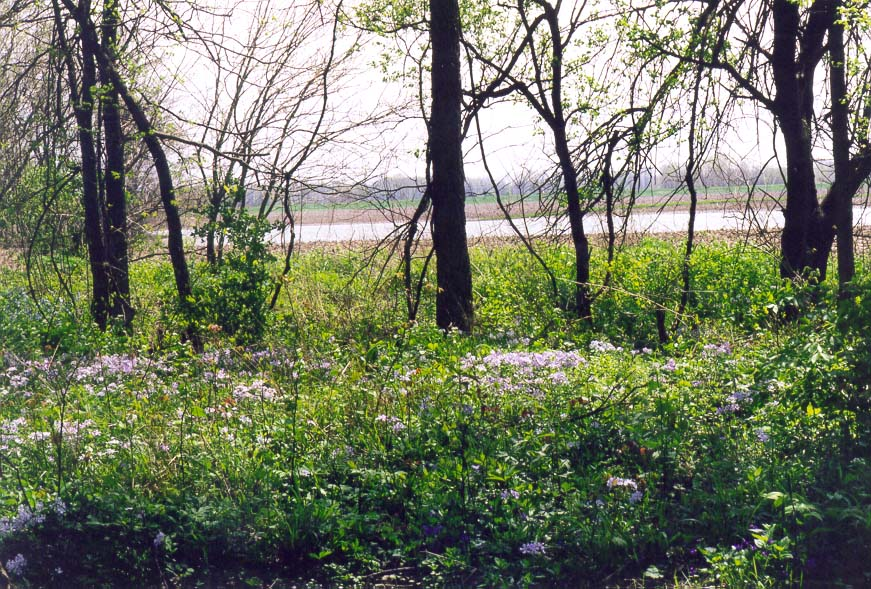 Lafayette  - Trail to Battle Ground 4/18/98