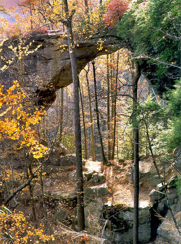 Gray's Arch, view from rock shelters. Red River Gorge, Kentucky