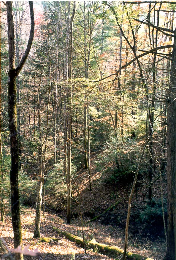Bottom of a canyon, view from Sheltowee Trail. Red River Gorge, Kentucky