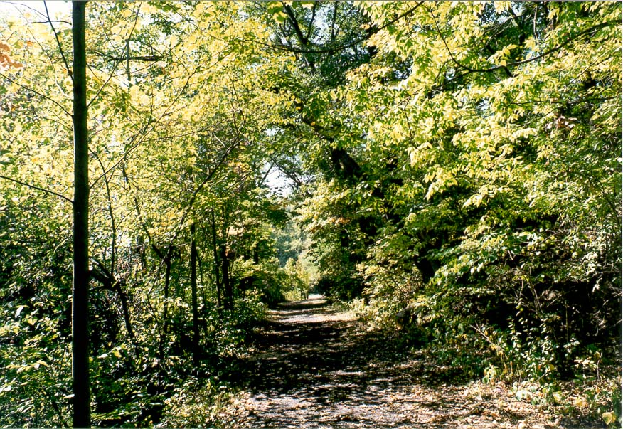 A trail in Ross Hills Park, 6 miles west from Lafayette, Indiana