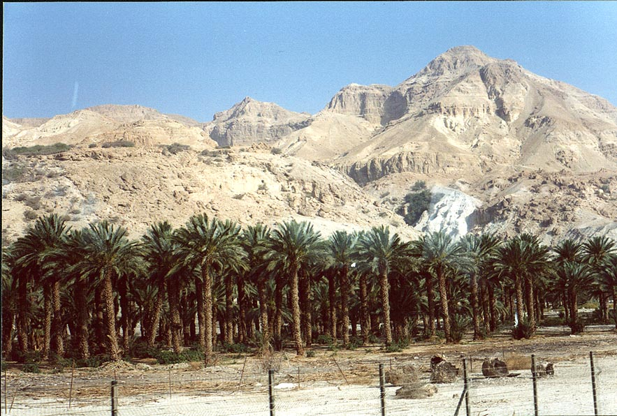 View of Ein Gedi from a road along Dead Sea. The Middle East