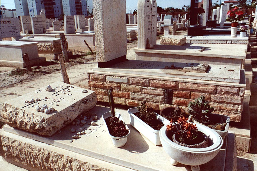 Cacti in Old Cemetery. Beer-Sheva, the Middle East