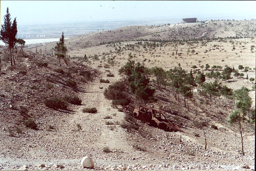 Pine forest in Negev Desert 1 mile north from Beer-Sheva. The Middle East