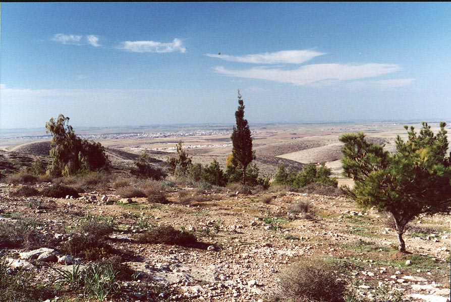 View of beginning of Lahav Forest from hills of N...north from Beer-Sheva. The Middle East