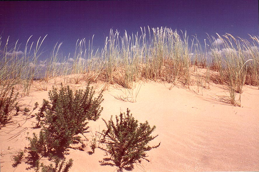 Dunes north from Ashkelon. The Middle East