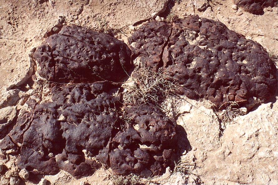 Blackened brain-like stones in limestone in...Nahal Hatsats river. The Middle East