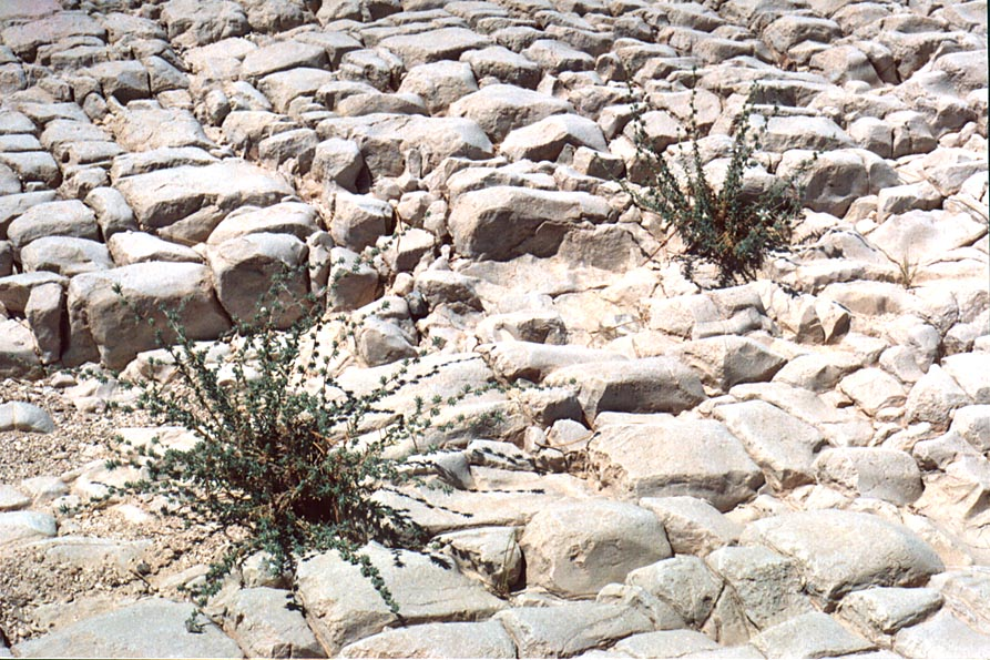 Riverbed of Nahal Bokek in Judean Desert, on a...west from Ein Bokek. The Middle East