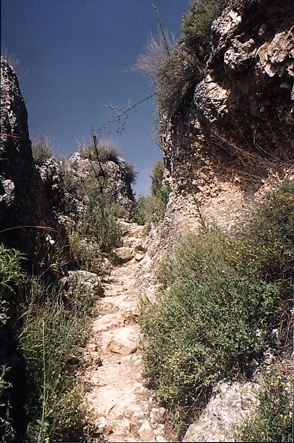Ancient donkey path from Safed to the mills of...Nahal Sekhvee River. The Middle East