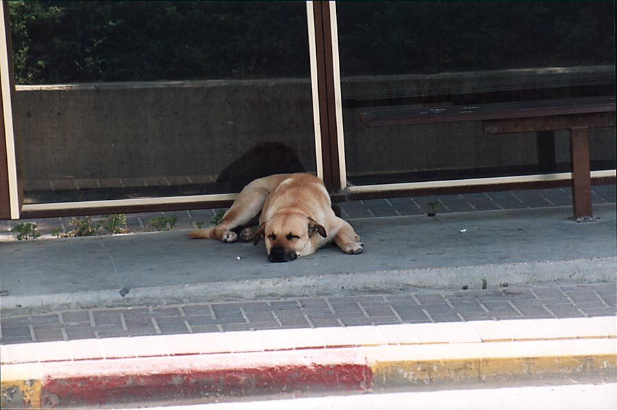 A dog sleeping at the bus stop at Ben Gurion Blvd...t operate. Beer-Sheva, the Middle East