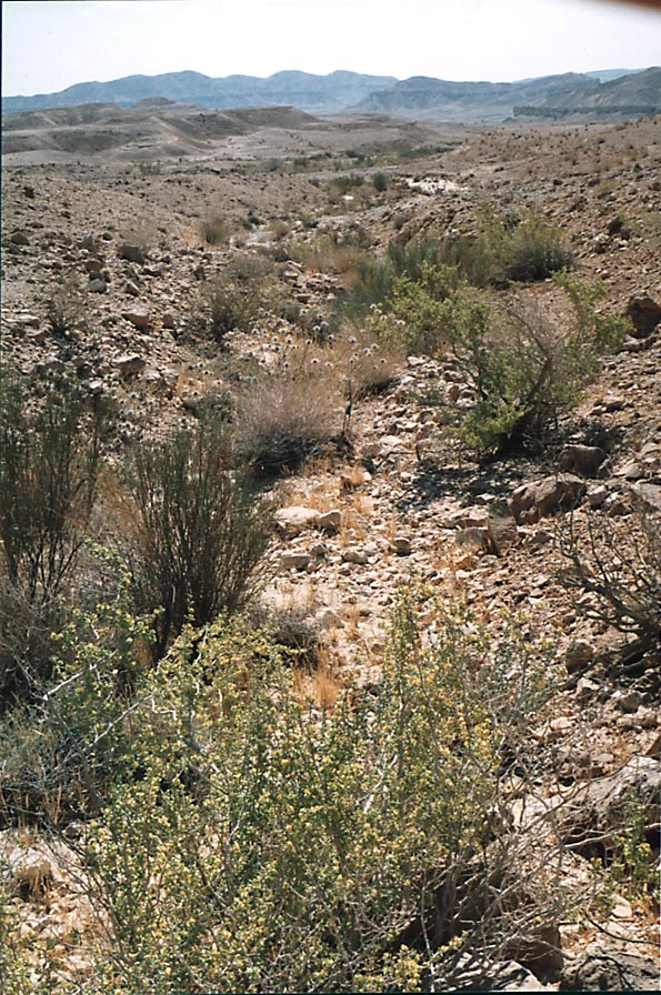 A tributary of Nahal Nekarot River running from...from Mitzpe Ramon. The Middle East
