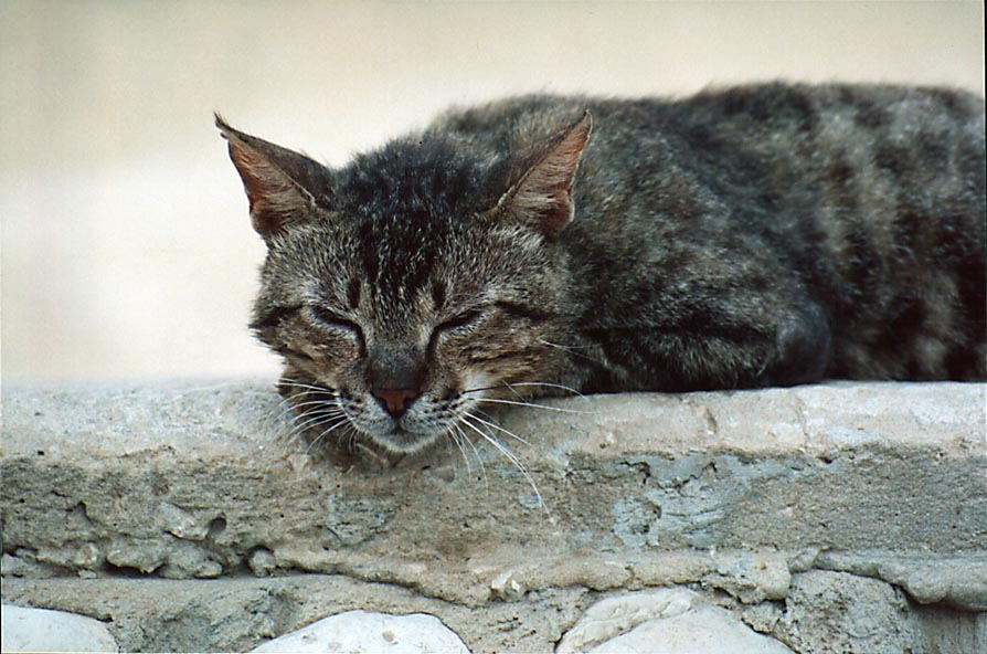 A sleeping cat on a wall at Wingate St.. Beer-Sheva, the Middle East