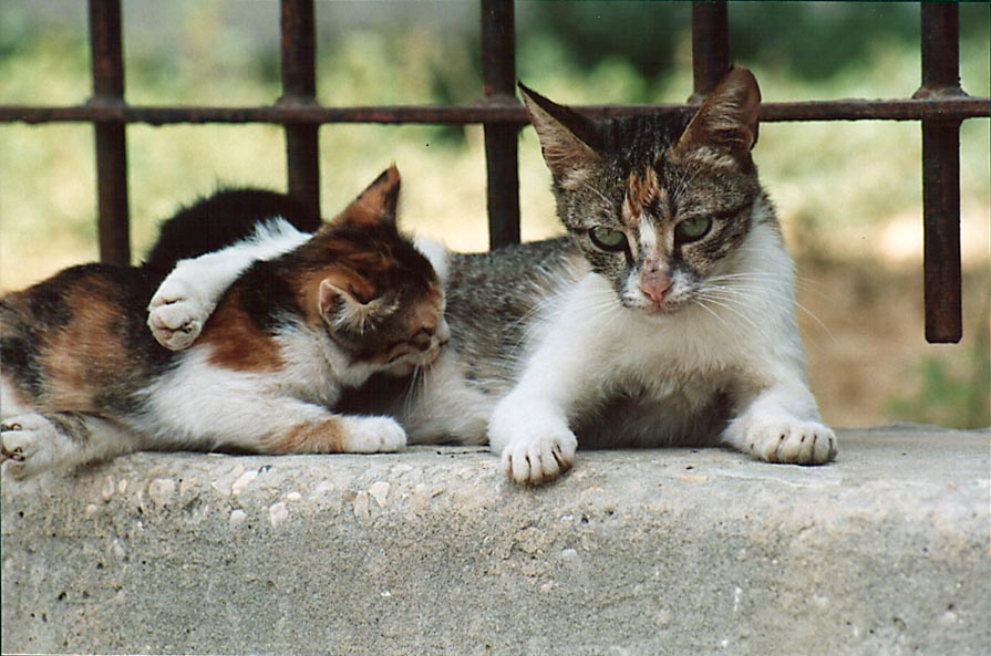A cat hugging a kitten at Nili St. in Shekhuna...Beer-Sheva, the Middle East
