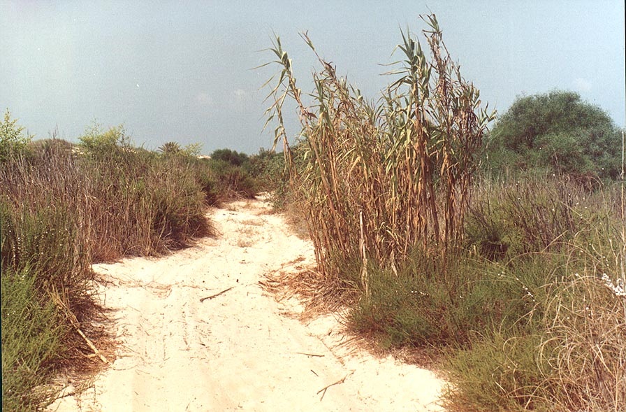 A road among dunes of Nizzanim. The Middle East