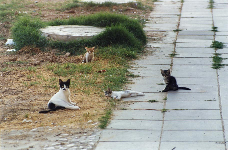 A cat playing with multicolored kittens at Nili St.. Beer-Sheva, the Middle East
