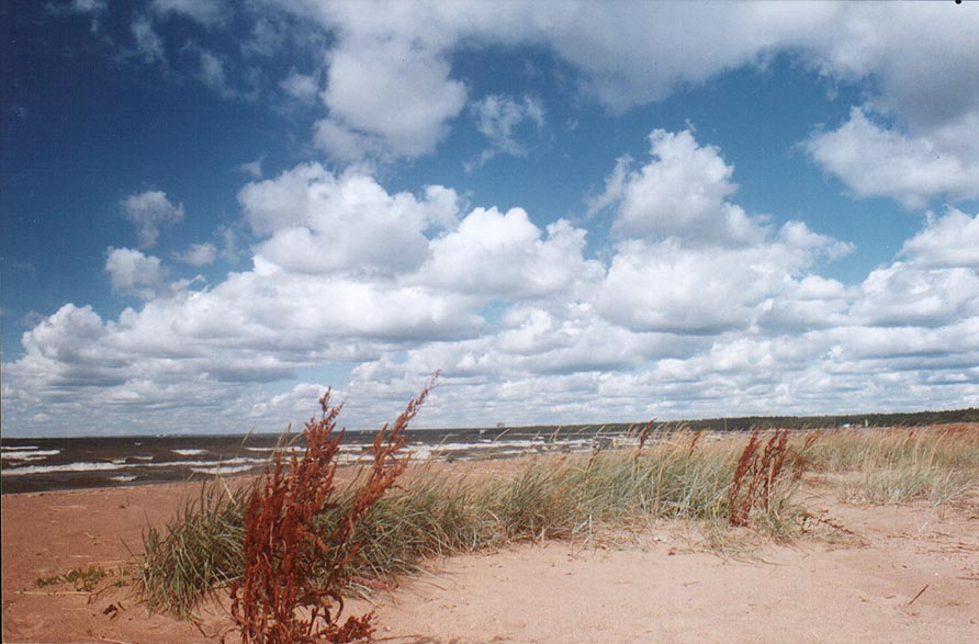 Dunes and Gulf of Finland between Solnechnoe and...windy day. Near St.Petersburg, Russia