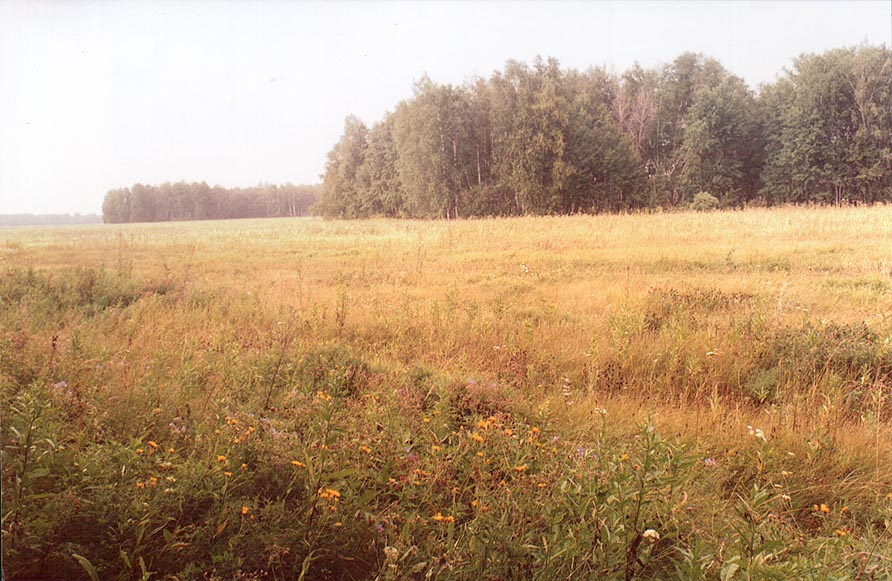 Typical birch groves of southern Ural near...South from Cheliabinsk, Russia