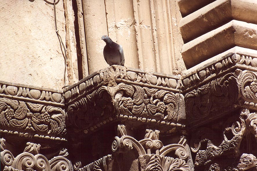 A dove gazing from a capitel of Church of Holy...Old City. Jerusalem, the Middle East
