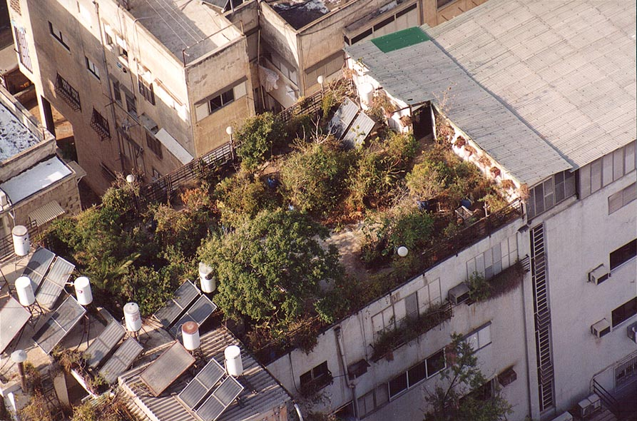 A garden on a roof of a house just to the north...tower. Tel Aviv, the Middle East