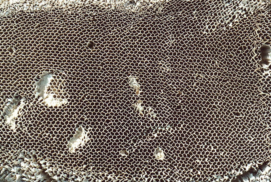 Bee's nest on a roadside west from Mount Sdom. The Middle East
