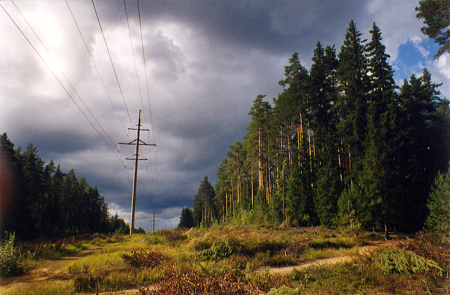 Electric transmission line right of way in a...miles north from St.Petersburg, Russia
