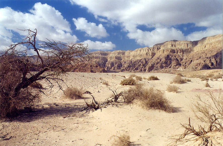 A small sandy area in western Timna Park, 13 miles north from Eilat. The Middle East