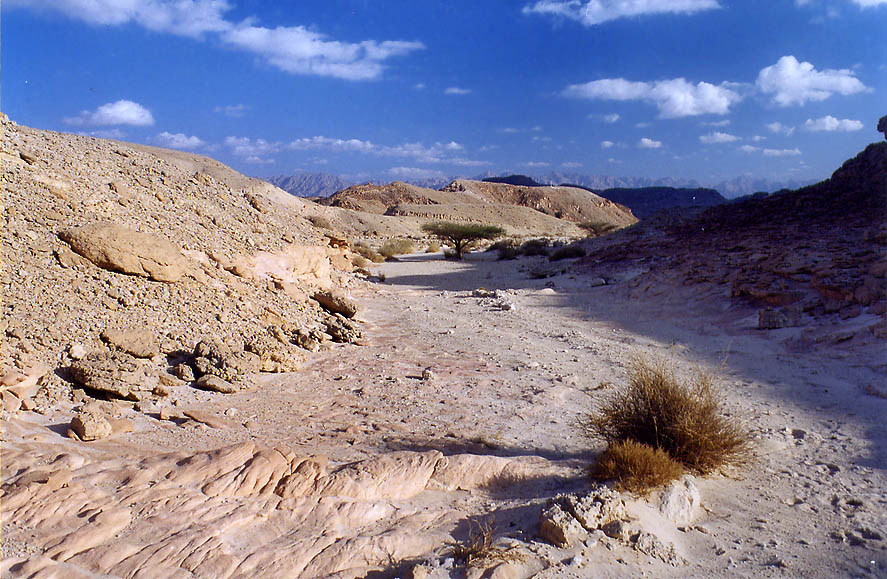A small wadi in western Timna Park, 13 miles north from Eilat. The Middle East