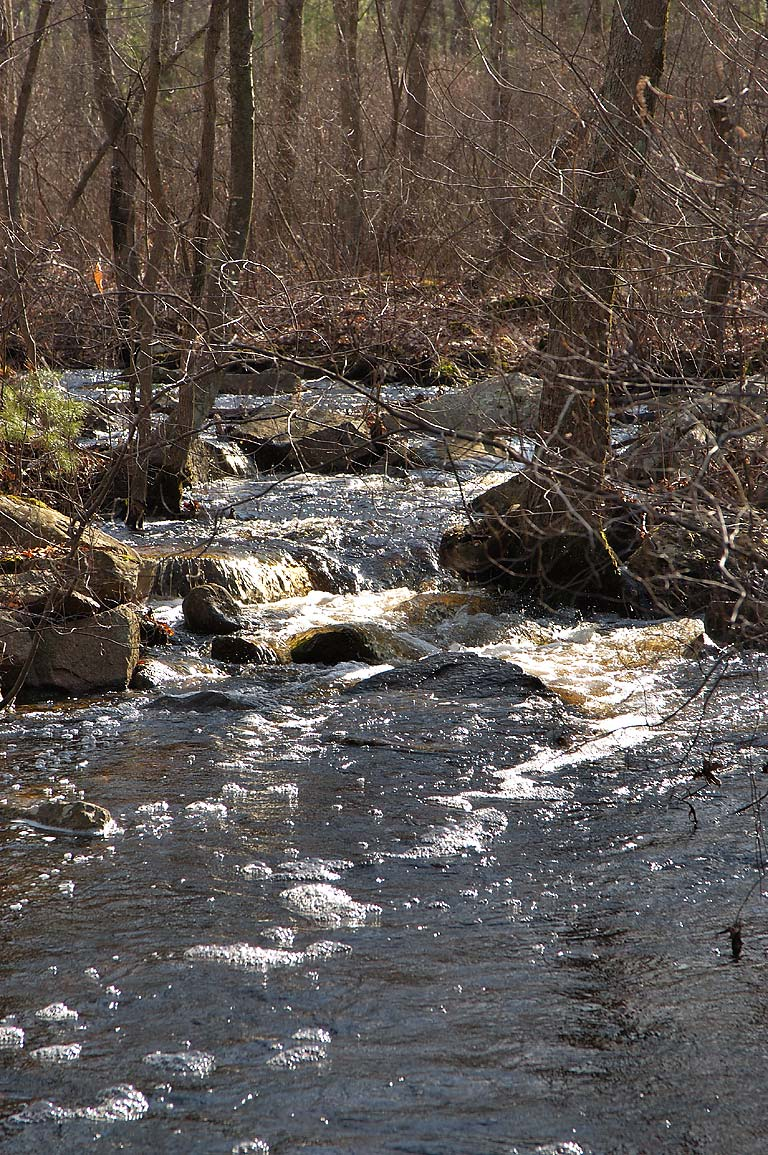Rattlesnake Brook in Freetown/Fall River State Forest. Massachusetts