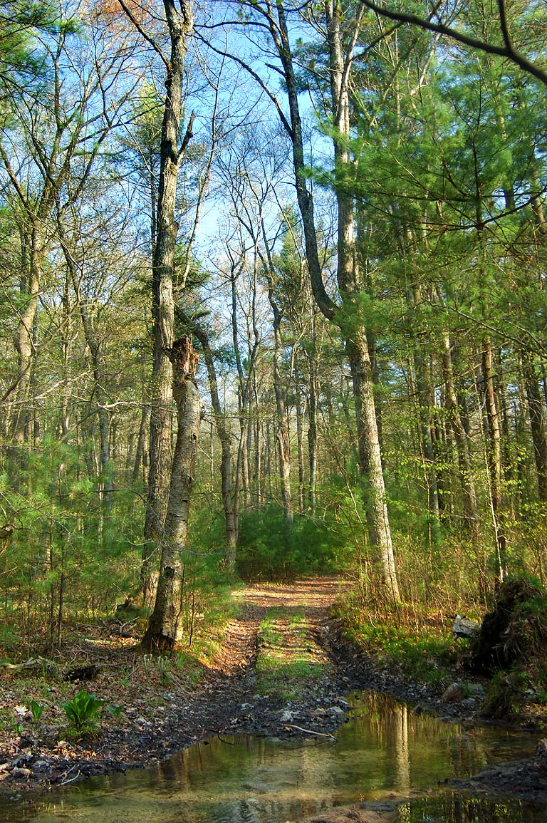 Near Breakneck Trail in Freetown/Fall River State Forest, Massachusetts