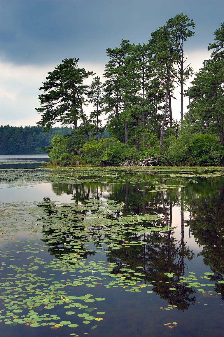 South-east side of East Head Reservoir in Myles Standish State Forest. Massachusetts