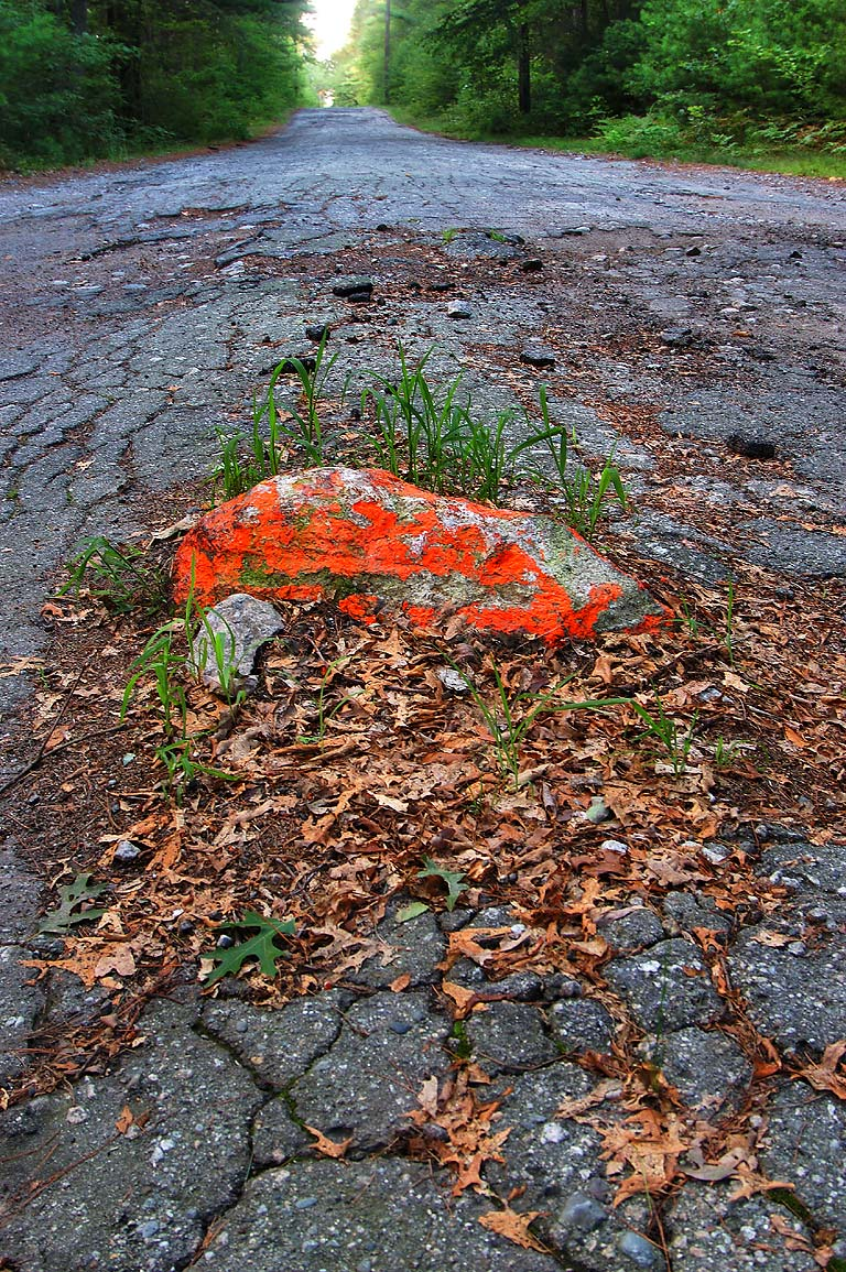 Protruding stone on Bell Rock Rd. in Freetown-Fall River State Forest. Massachusetts