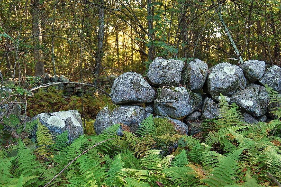 Abandoned stone wall in a forest near Doctor's...Fall River State forest. Massachusetts