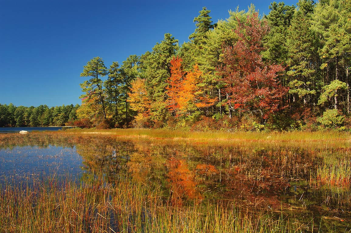 East end of Rocky Pond in Myles Standish State Forest. Massachusetts