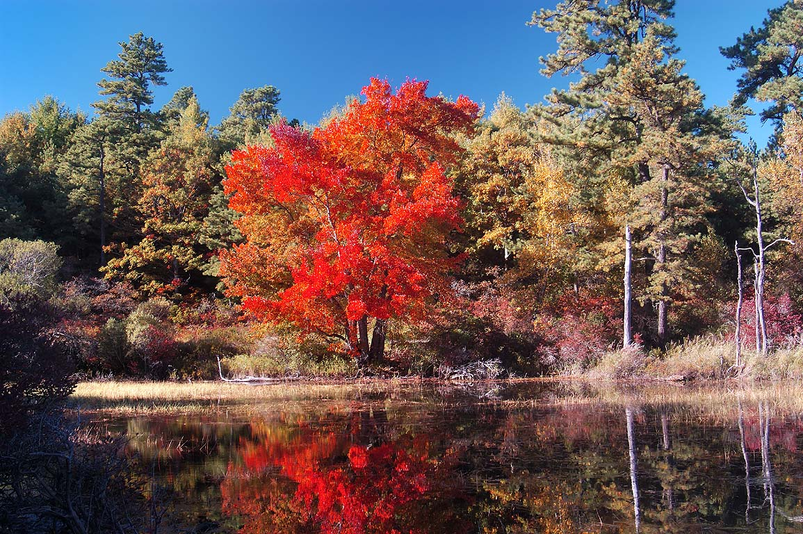 North end of New Long Pond in Myles Standish State Forest. Massachusetts