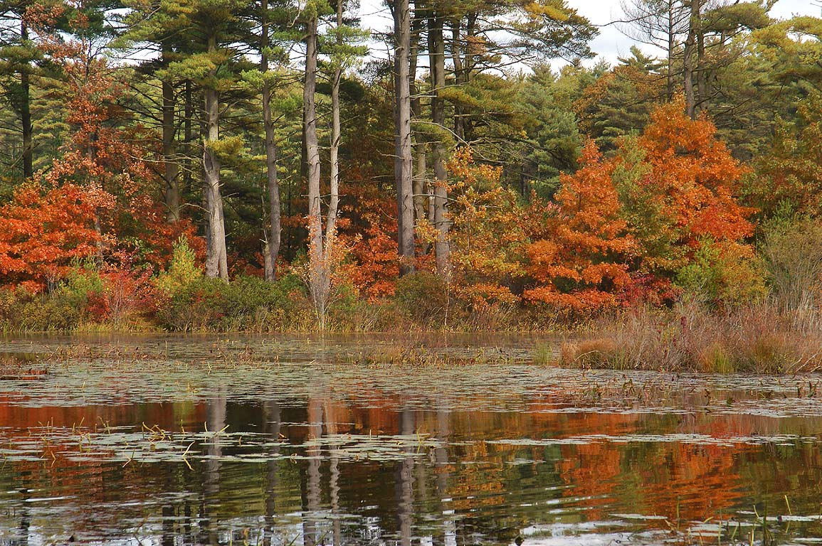 Kings Pond in Massasoit State Park. East Taunton, Massachusetts