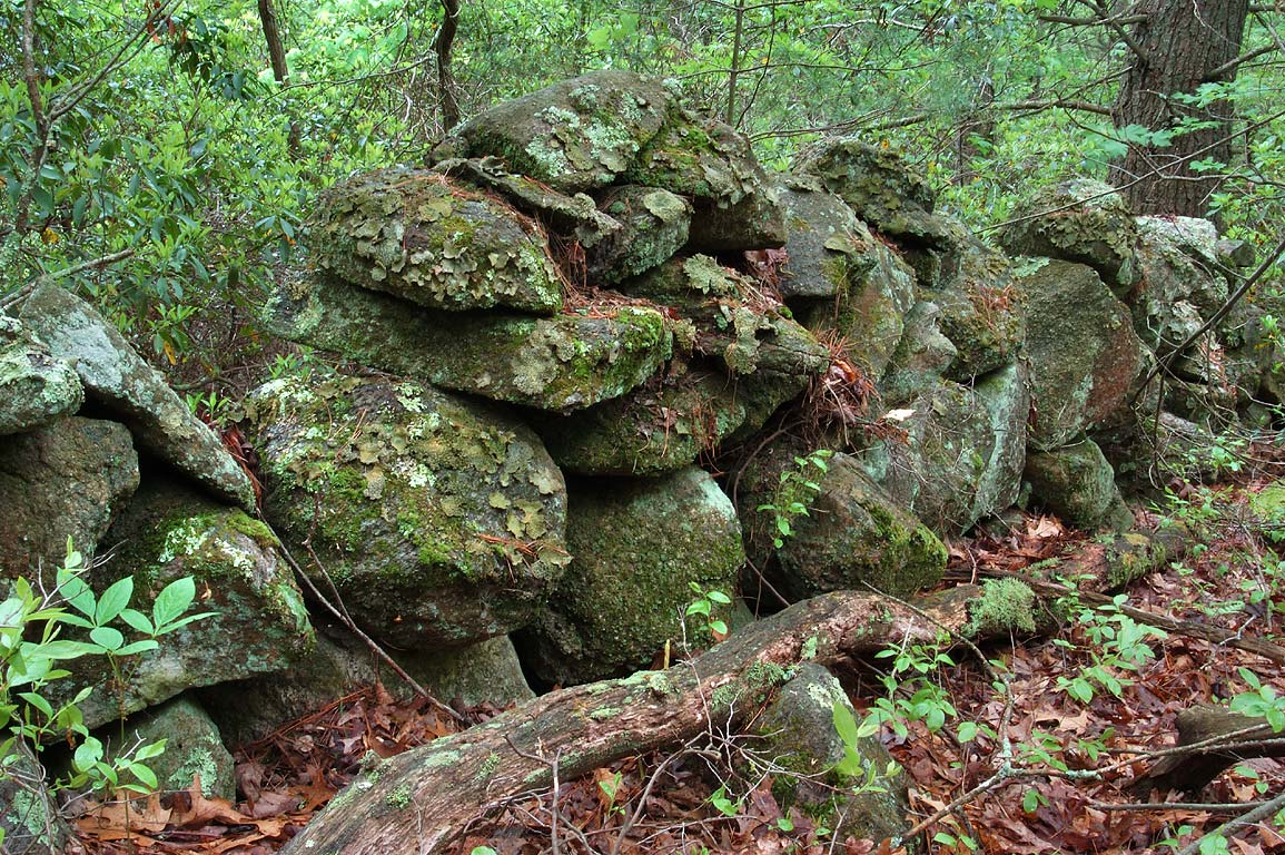 Abandoned stone wall in Fisherville Brook...of Red trail. Exeter, Rhode Island