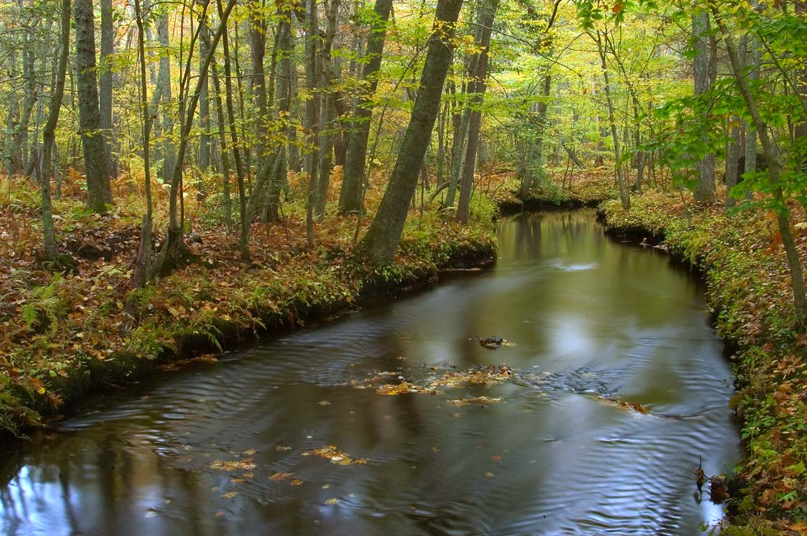 Dundery Brook in Wilbour Woods park. Little Compton, Rhode Island