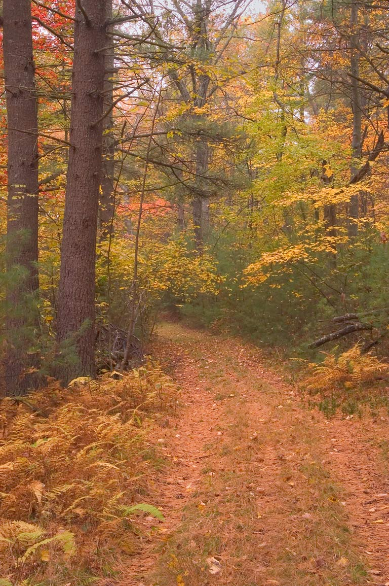 Donahue Trail in Freetown/Fall River State Forest. Massachusetts