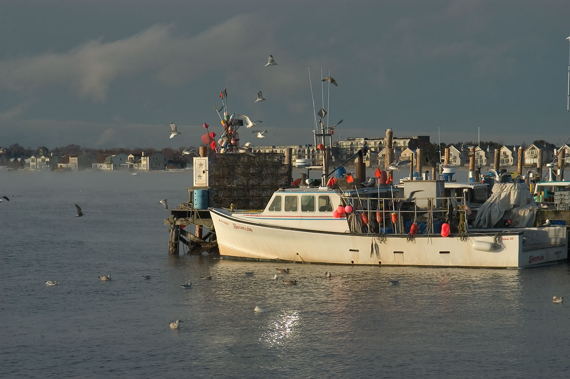 A fishing boat and gulls, view from Long Wharf. Newport, Rhode Island