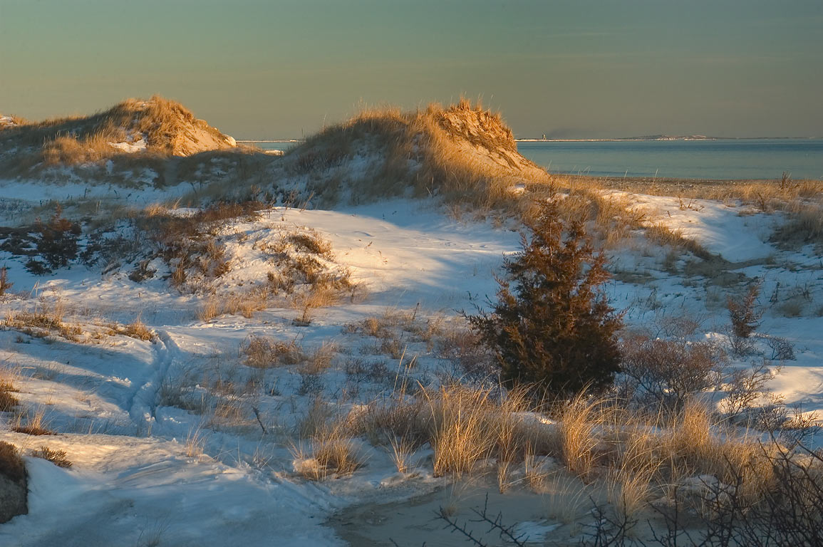 Dunes of Horseneck Point at evening. Westport, Massachusetts