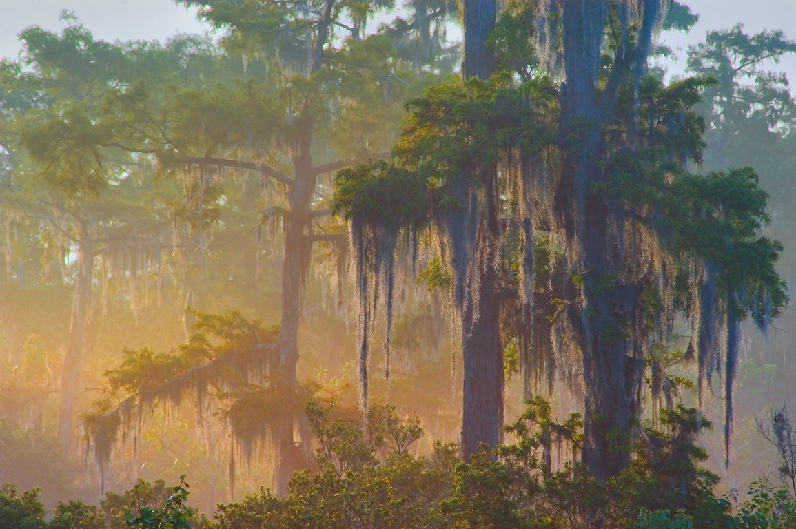 Morning mist as seen from Marsh Overlook Trail in...south from New Orleans. Louisiana