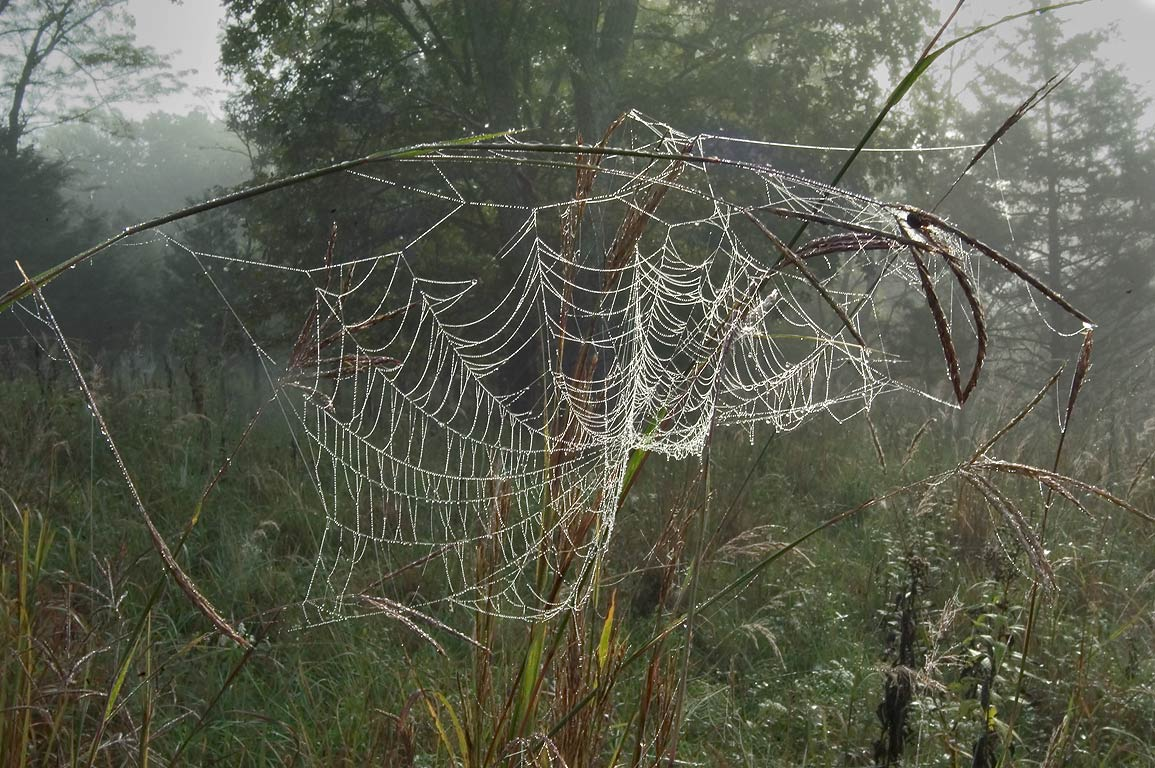Dew on spider web at morning near High Ridge...Bridge State Park. Columbia, Missouri