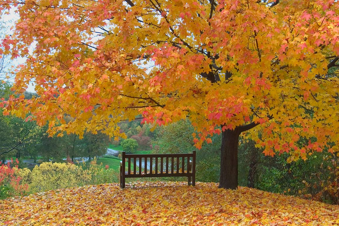 A bench overlooking Houston Pond in F. R. Newman Arboretum. Ithaca, New York
