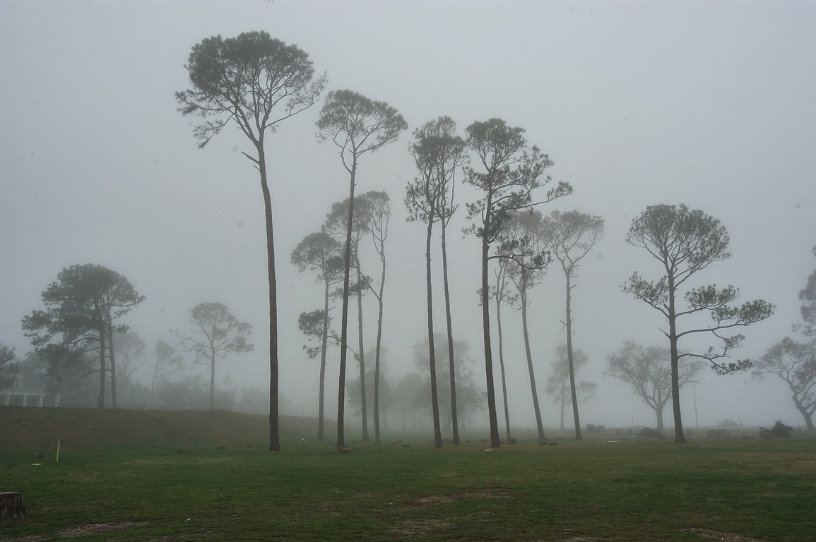 Lakeshore Park in fog. New Orleans, Louisiana