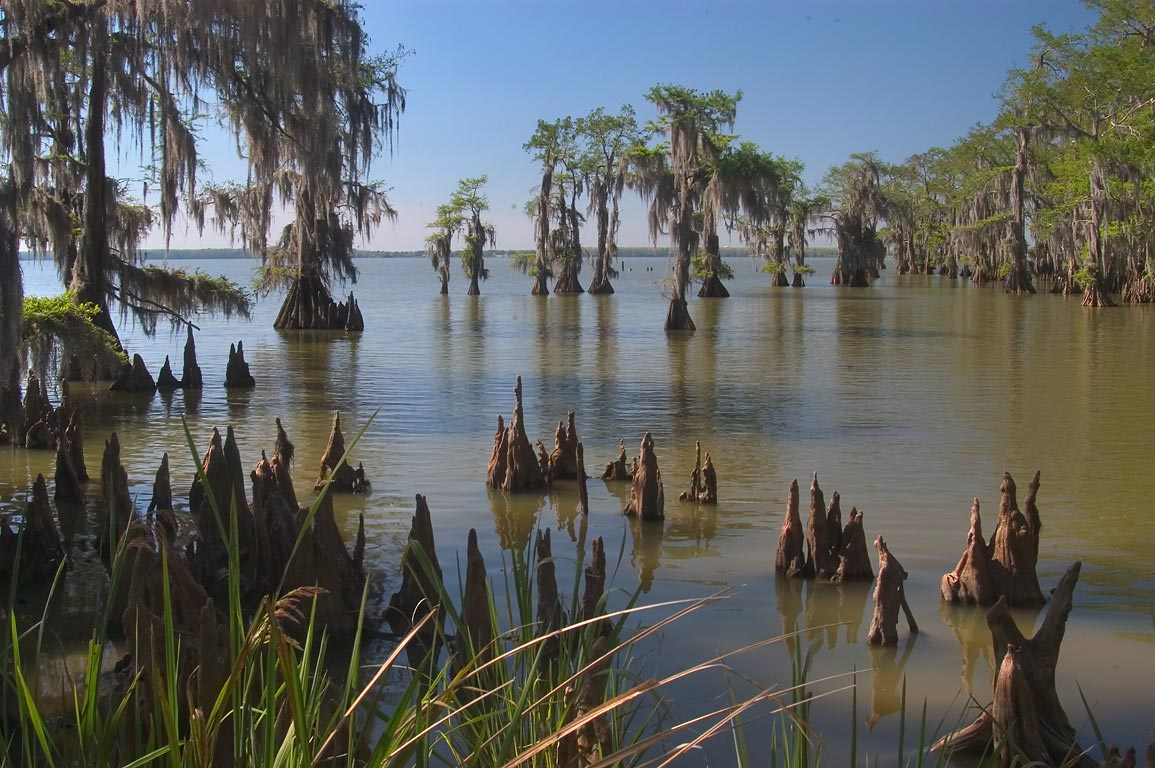 Cypresses in Lake Palourde in Brownell Memorial Park. Morgan City, Louisiana