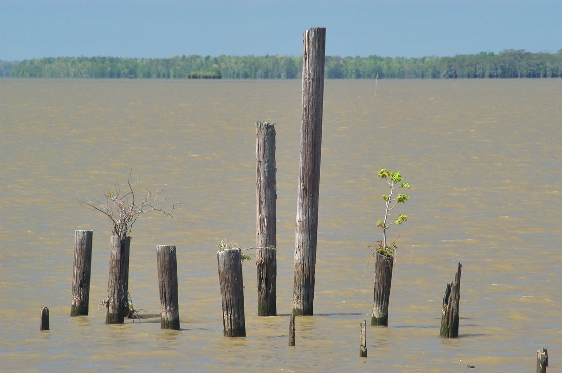 Piles in Lake Fausse Pointe, view from Levee Rd., St.Mary Parish. Louisiana