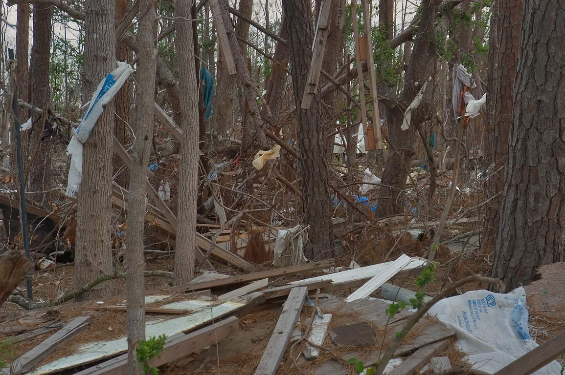 Littered dead forest at Pine Tree St. in Bay St.Louis. Mississippi