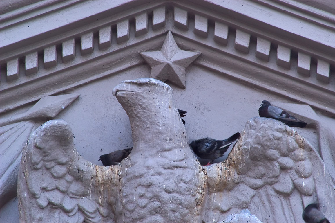 A bald eagle besieged by pigeons on a pediment of...French Quarter. New Orleans, Louisiana
