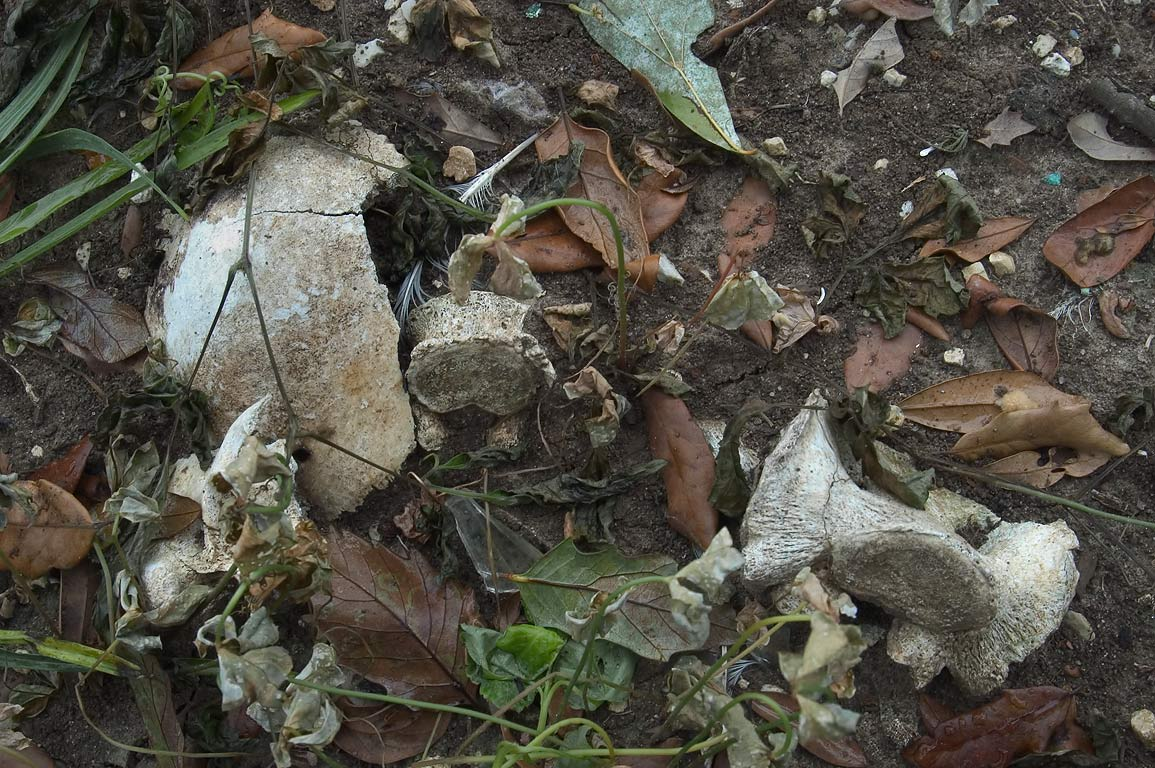 Bones and skulls surfaced in Holt Cemetery. New Orleans, Louisiana