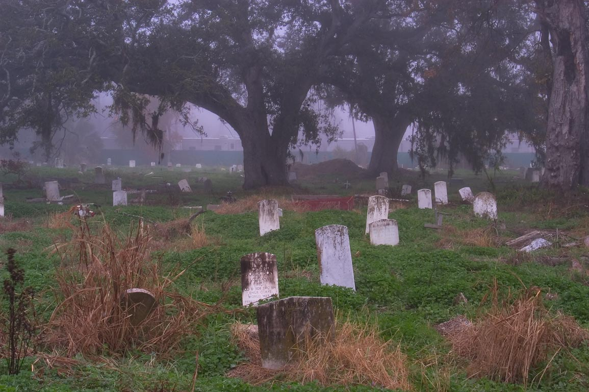 Oaks in Holt Cemetery in fog. New Orleans, Louisiana