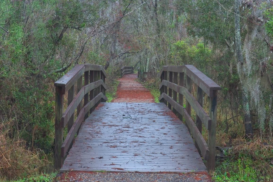 A boardwalk of Bayou Coquille Trail in Barataria...South from New Orleans, Louisiana